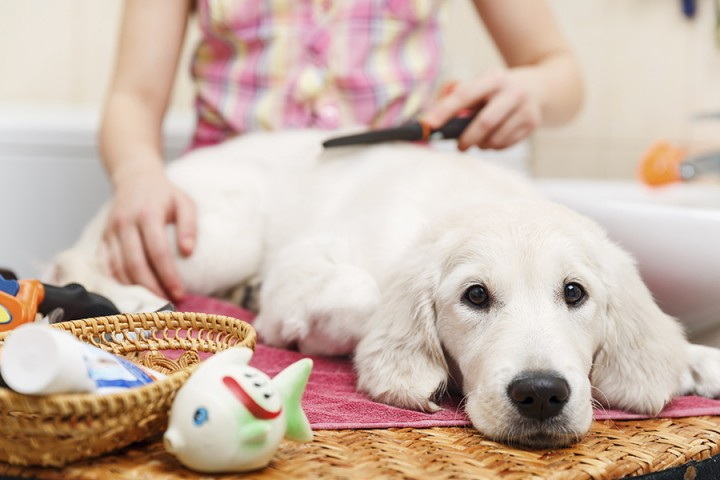 Dogs can get allergies and itchy skin, too