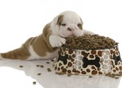 [Giveaway] Put an end to overfeeding with the Eatwell Pet Feeder