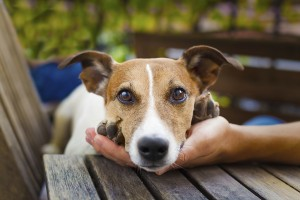 Top causes for a smelly pet (and how to help!)