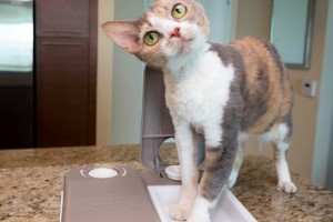No more worries about missing your pet's feeding time