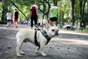 Rex and the city: Keeping your city pet healthy