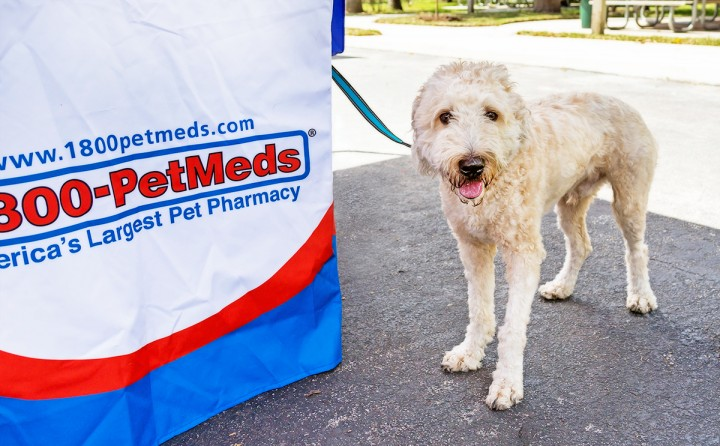 A dog visits the PetMeds booth