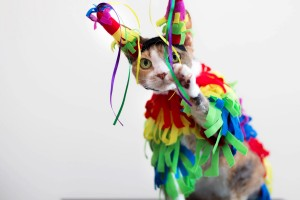 How to choose the right pet Halloween costume