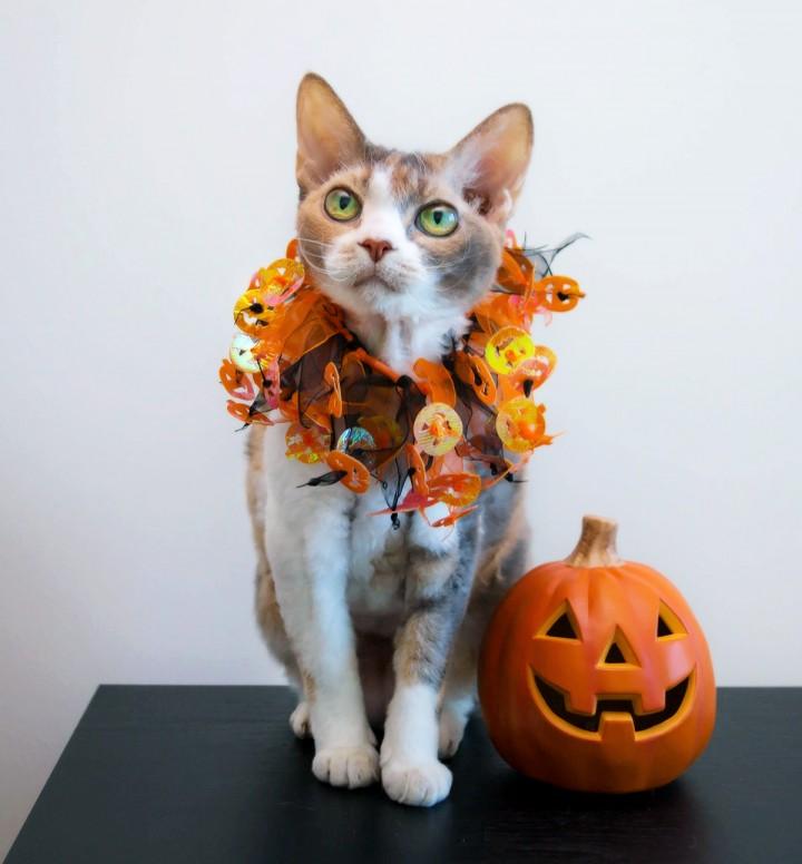 Daisy prepares for October festivities