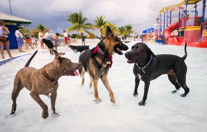 Dogs having fun at Barktoberfest