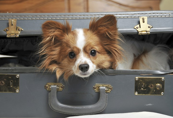 Vacation planning for your pets