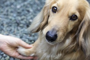 4 easy ways to prevent painful paws