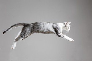 [New Product] DVM Feline Joint Gel keeps your cat in the game
