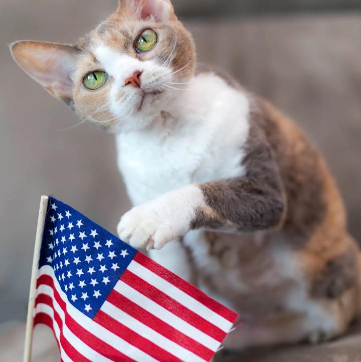 Daisy prepares for Veterans Day