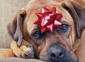 A holiday hazard: how to help your pet's stomach upset