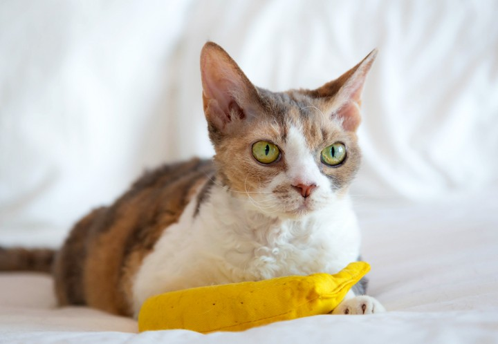 Harley was not gentle with the catnip banana