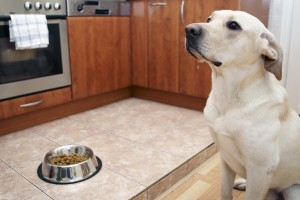 The best way to transition your pet to a new food