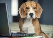 The internet and your pet: watch out for this danger