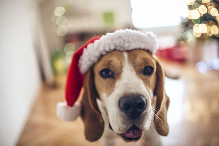The holidays can be dangerous for pets