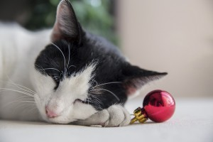 Christmas tree safety tips for cats