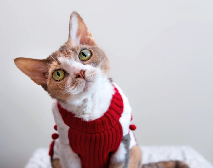 Daisy has doubts about her holiday sweater
