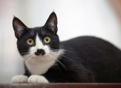 Know when you should be concerned about your cat's runny eyes