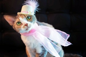 How to have the best-dressed pet on National Hat Day