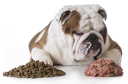 Find Stella & Chewy's Carnivore Crunch Freeze-Dried Treats at 1800PetMeds