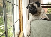 Have pets? The best option for a worry-free vacation