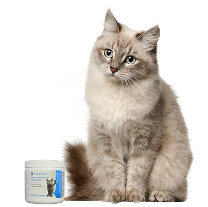 Buy Duralactin Feline + Fatty Acids Soft Chews at 1800PetMeds