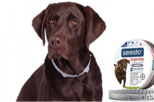 Seresto brings the flea collar into the 21st Century