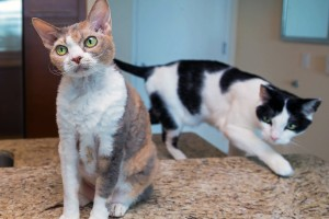 What you need to know about adopting the perfect cat