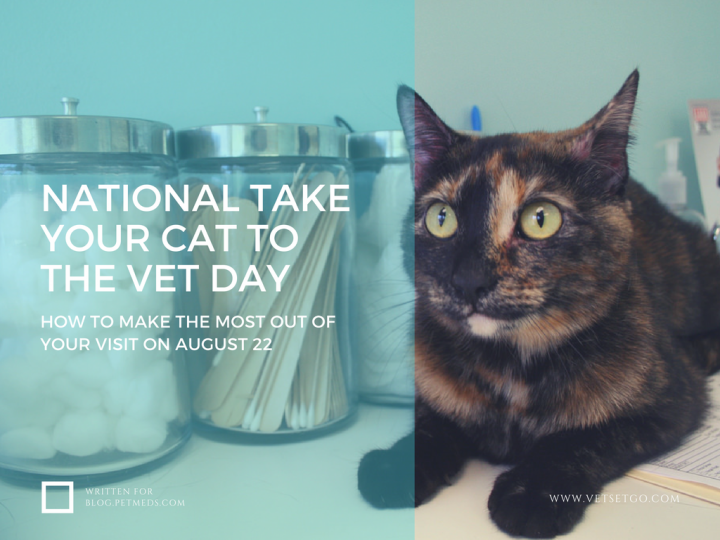 Learn how to make the most out of your cat's veterinary visit