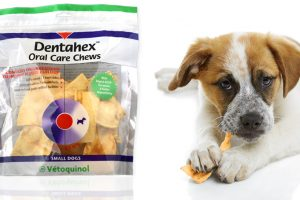 [Giveaway] Win Dentahex Oral Care Chews for Dogs
