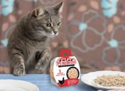 [Giveaway] Win FREE PureBites Whole Food for Cats