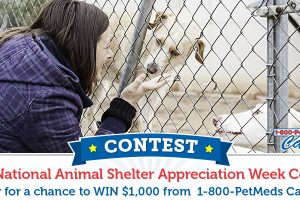 Show an animal shelter some appreciation by voting now!