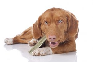 [New Product] Crumps' Naturals Elk Antler Dog Chew