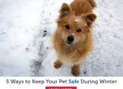 5 ways to keep your pet safe during winter