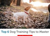 The most valuable dog training skills to master now