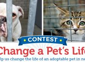 Help change the life of a pet in need!