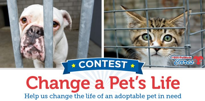 2017 1-800-PetMeds Cares™ Change a Pet's Life Contest