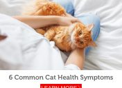 Look out for these 6 symptoms of illness in cats