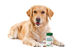 [New Product] Advantus Oral Flea Treatment Soft Chews for Dogs