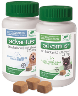 Find Advantus Oral Flea Treatment Soft Chews for Dogs at 1800PetMeds