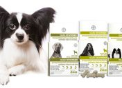 [New Product] Bayer Expert Care Quad Dewormer Chewable Tablets for Dogs