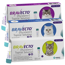 buy Bravecto for Cats