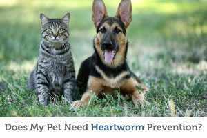 Do all pets really need heartworm prevention?