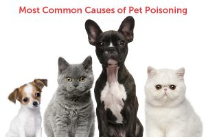 The most common causes of pet poisonings (and how to prevent them!)