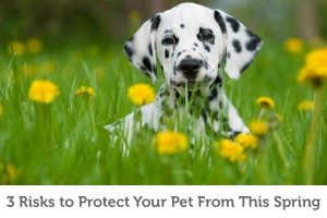 Is your pet protected from these 3 spring risks?