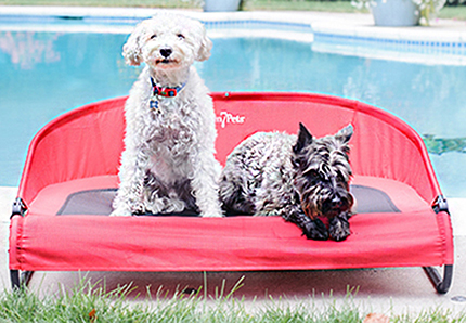 Find the Gen7Pets Cool-Air Cot Pet Bed at 1800PetMeds
