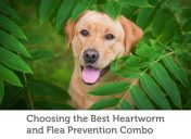 A guide to all-in-one flea and heartworm prevention