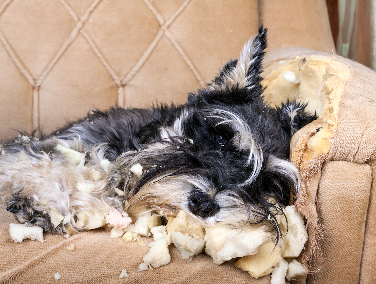 Separation anxiety in dogs - PetMeds® Pet Health Blog