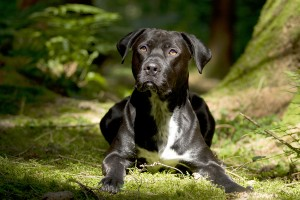 Lyme Disease in dogs: symptoms, risks and prevention