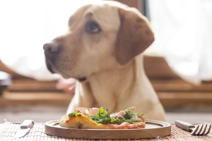 Colitis (inflammatory bowel disease) in cats and dogs