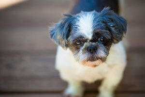 Diagnosing eye problems in your pet